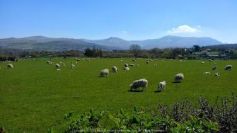 One of the most serene views I have ever witnessed – The Welsh countryside (clicked in Wales during our Easter Weekend Drive with Palas and Antara)